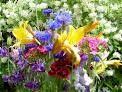 Blomsterplockning Mora Camping