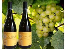 Viner från Sydamerika