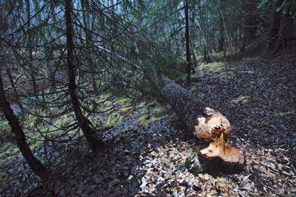 Ålidbergets naturreservat