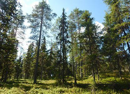 Ottjärns naturreservat