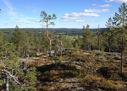 Skalbergets naturreservat