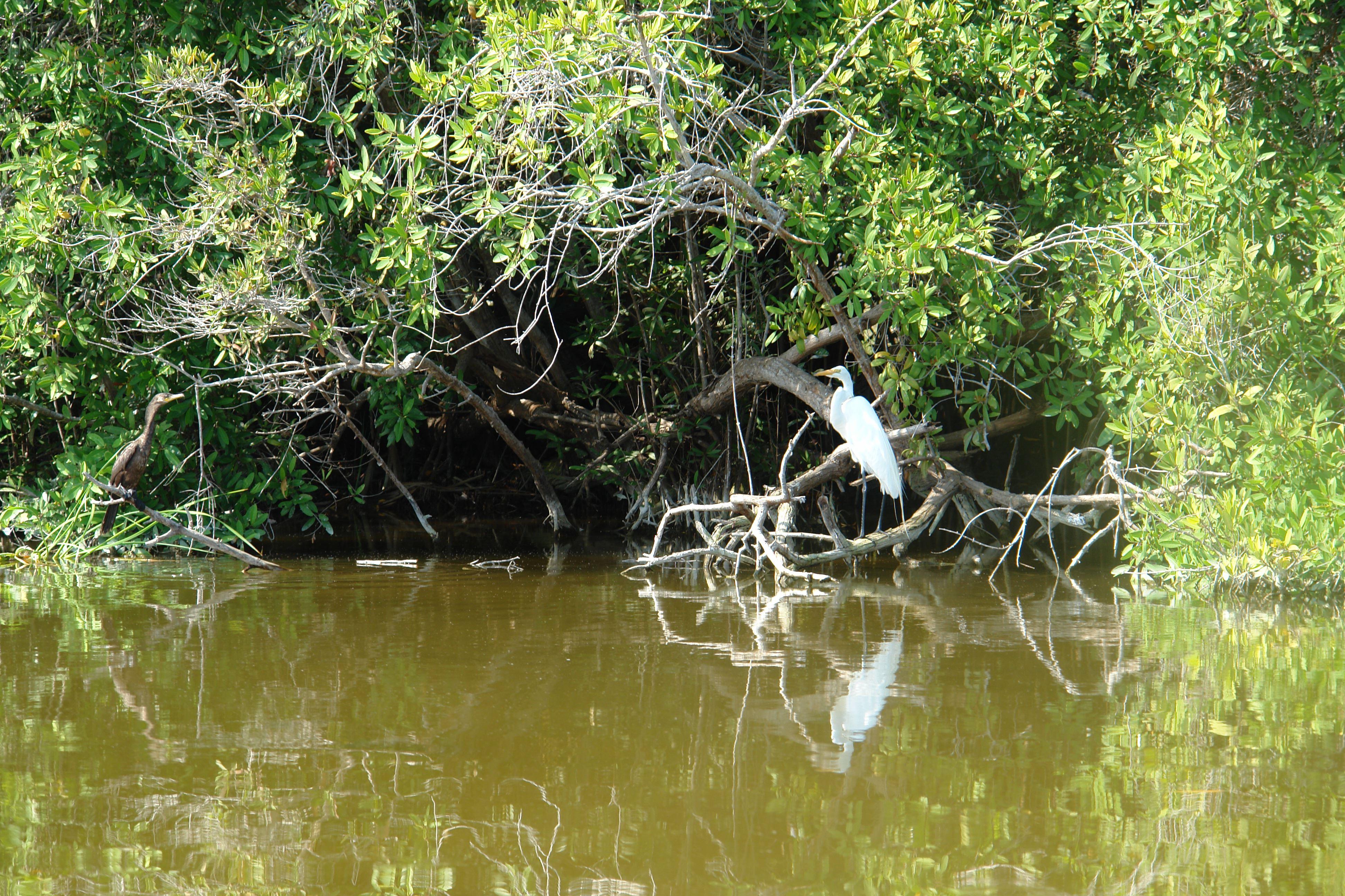Eco Tortugas y Manglares