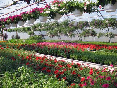 Hellqvist's Garden