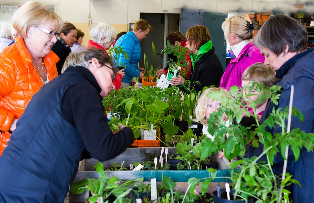 Trädgårdssöndag på Bergviks Industrimuseum