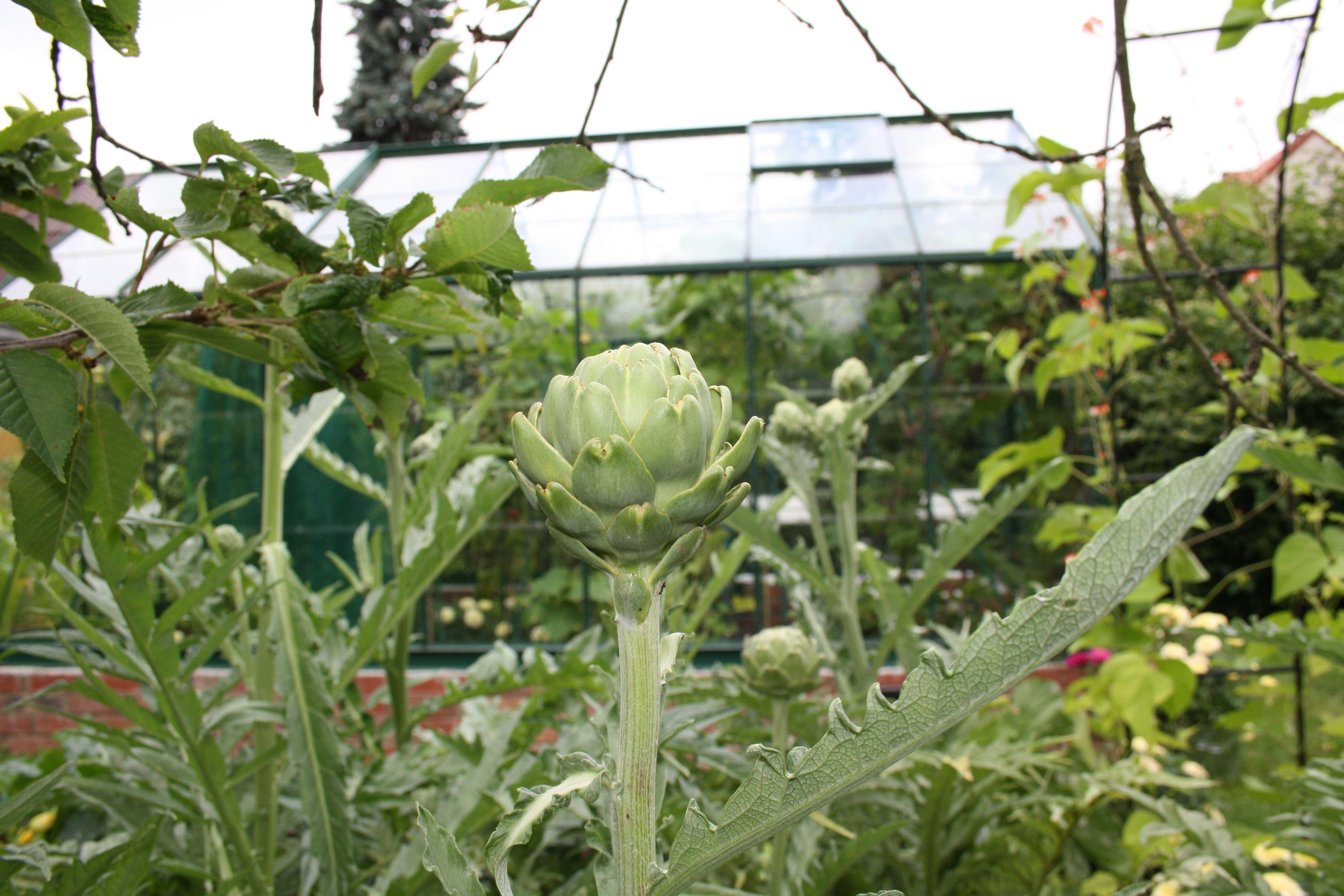 Föreläsning - Odla grönsaker i växthus och på friland