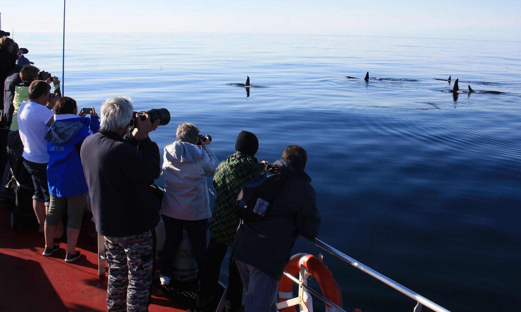 Arctic Whale Tours,  © Arctic Whale Tours, Arctic Whale Tours
