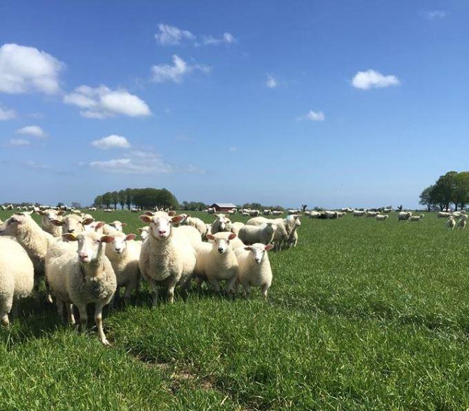 Gåvetorps Lamm - Lamb and Sheep products