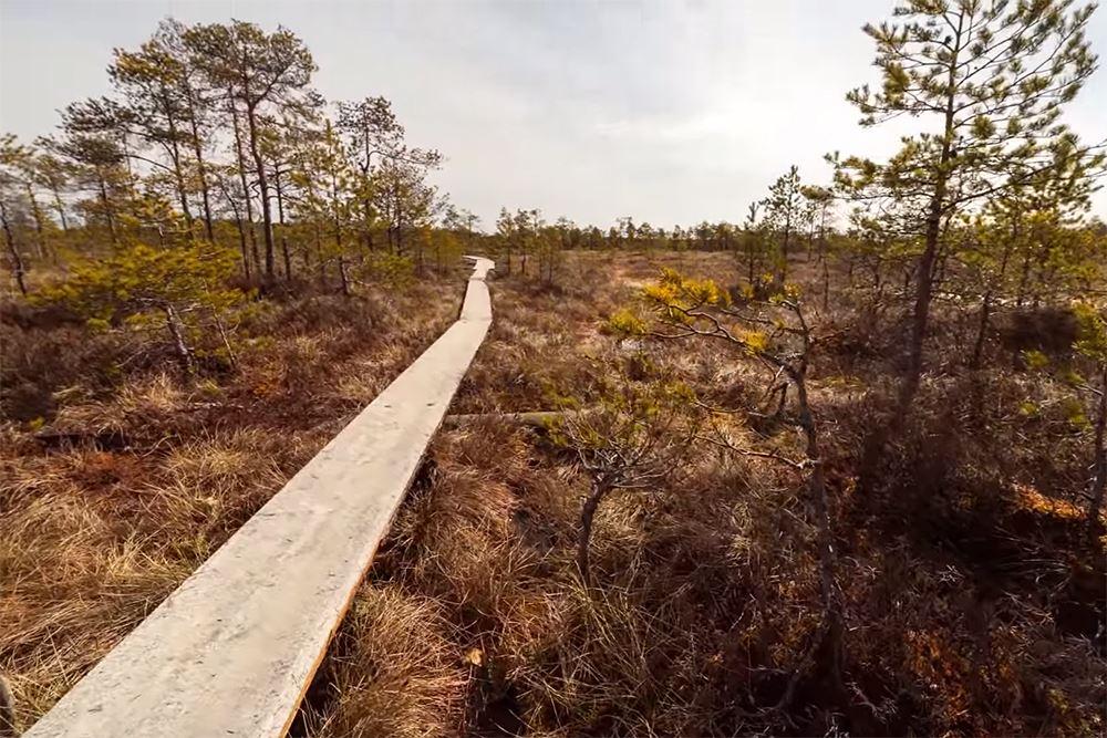 The Linnaisten swamp (Linnaistensuo)