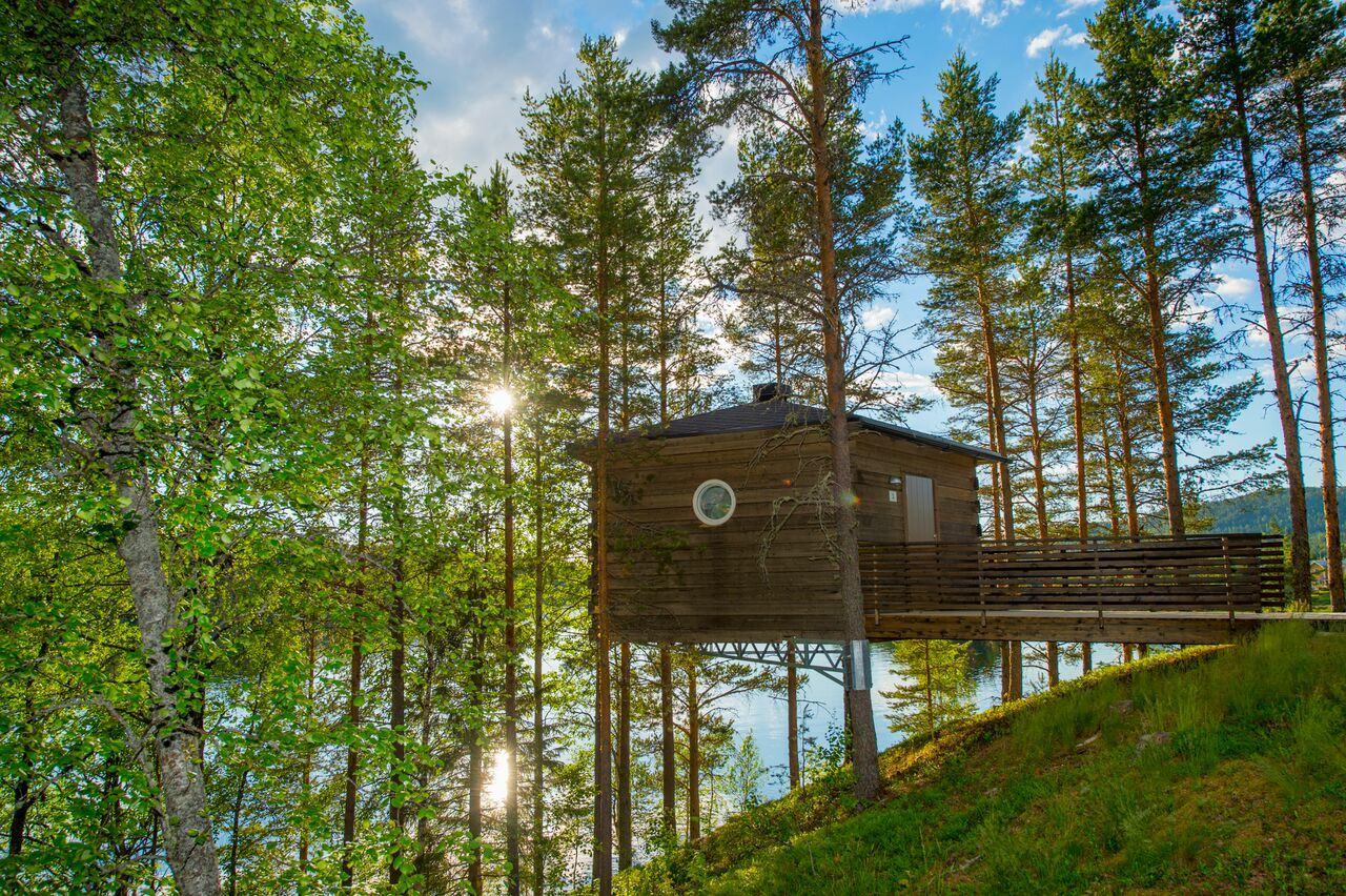 © Granö Beckasin, Granö Beckasin Fågelnäste