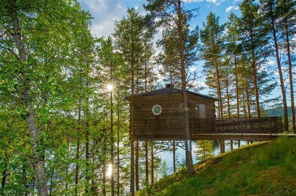 © Granö Beckasin, Granö Beckasin birds-nest