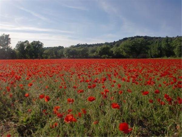 Special Lavender Tour F2: Fontaine de Vaucluse/Abbaye de Sénanque (photo stop) Gordes/Roussillon/Sault - Provence Travel