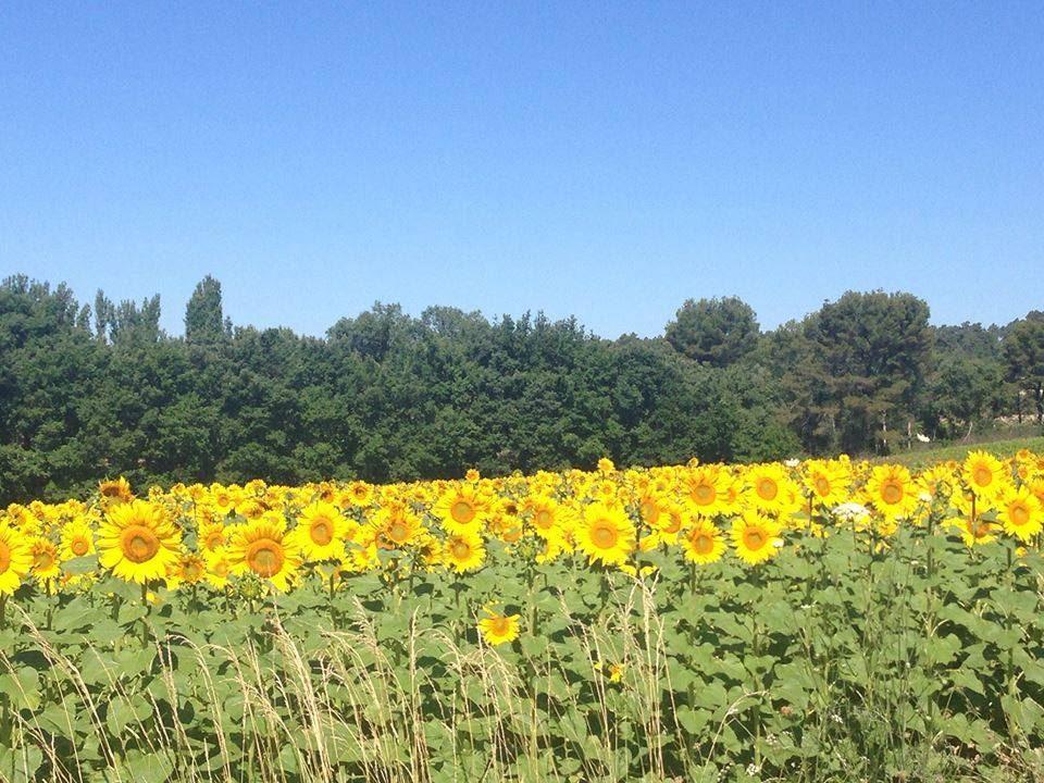 Special Lavender Tour F1: Valensole/Gordes /Abbaye de Sénanque (photo stop)/Roussillon - Provence Travel