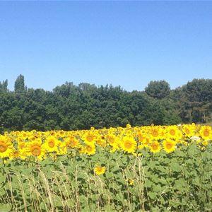 Special Lavender Tour F1: Valensole/Gordes (photo stop)/Abbaye de Sénanque (photo stop)/Roussillon - Provence Travel