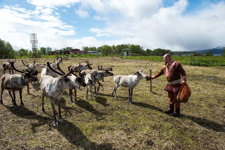 Sami Culture and Feeding the Reindeer – Tromsø Lapland