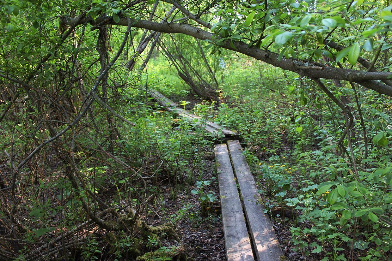 Vääksynjoki nature trail