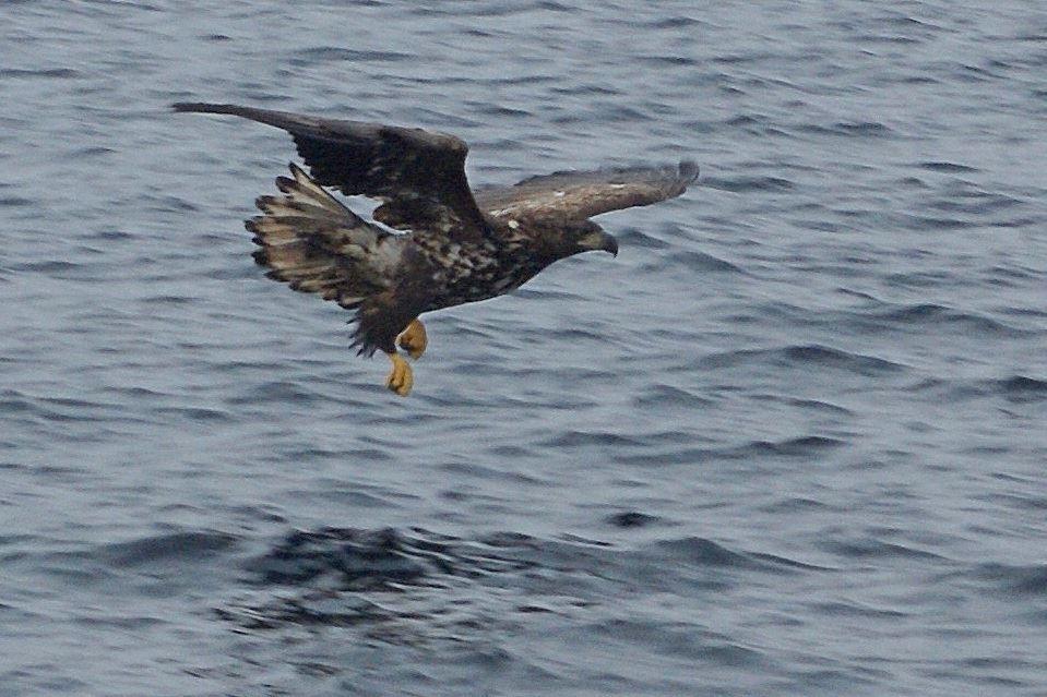 Ferd Marin - Fisketur - Opplevelser - Charter
