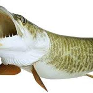 Getadraget-kalastuskilpailu