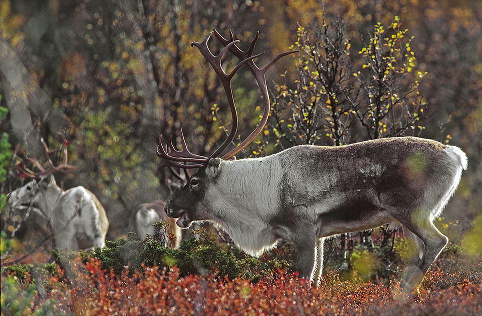 Mats Ricklund, Naturfotovecka Funäsjällen