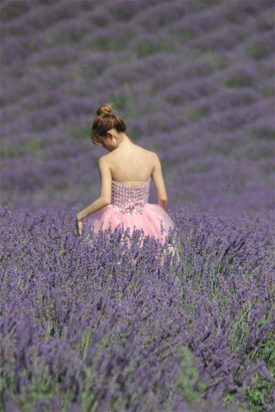 Tour de lavande dans les villages de Provence - L'ECHO DE PROVENCE