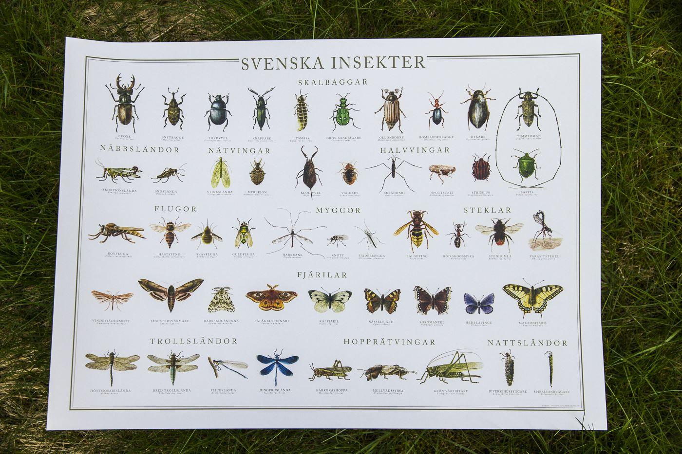 Nyhet - insektsaffisch