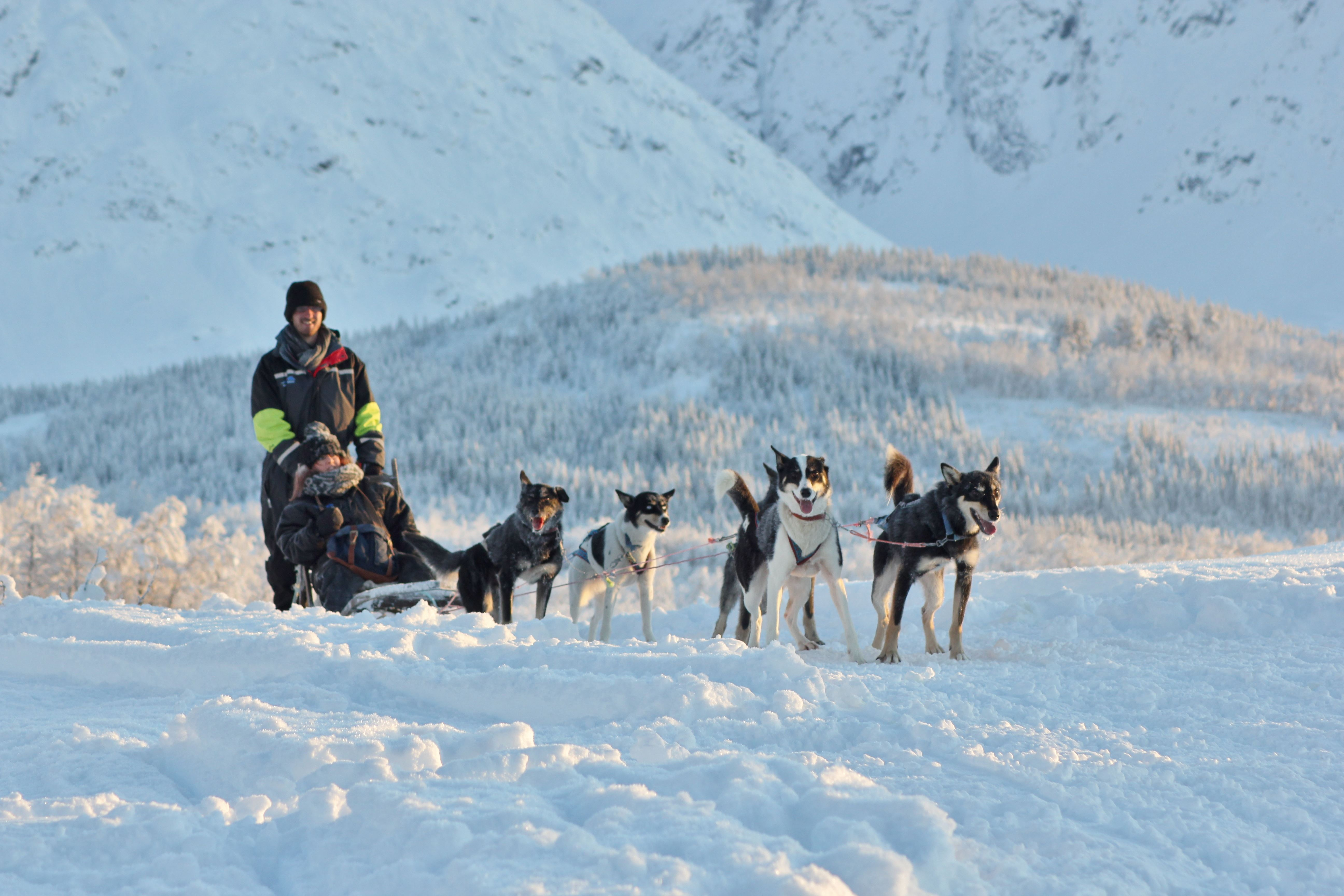 Dog Sledding Daytime - Aurora Alps