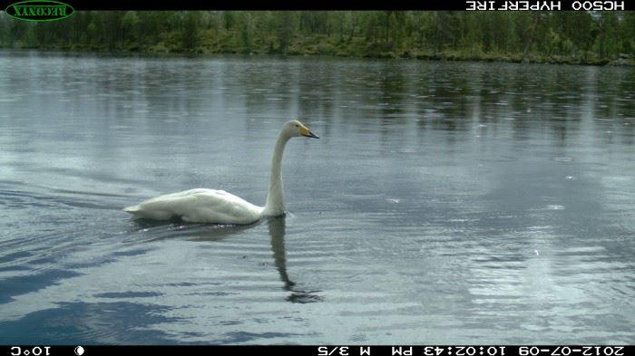 © Nasjonalparkstyre, Nationalpark øvre pasvikdalen
