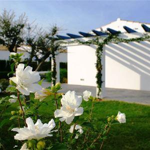 Trädgård, Villas Finesse, Son Bou, Menorca, Signaturresor
