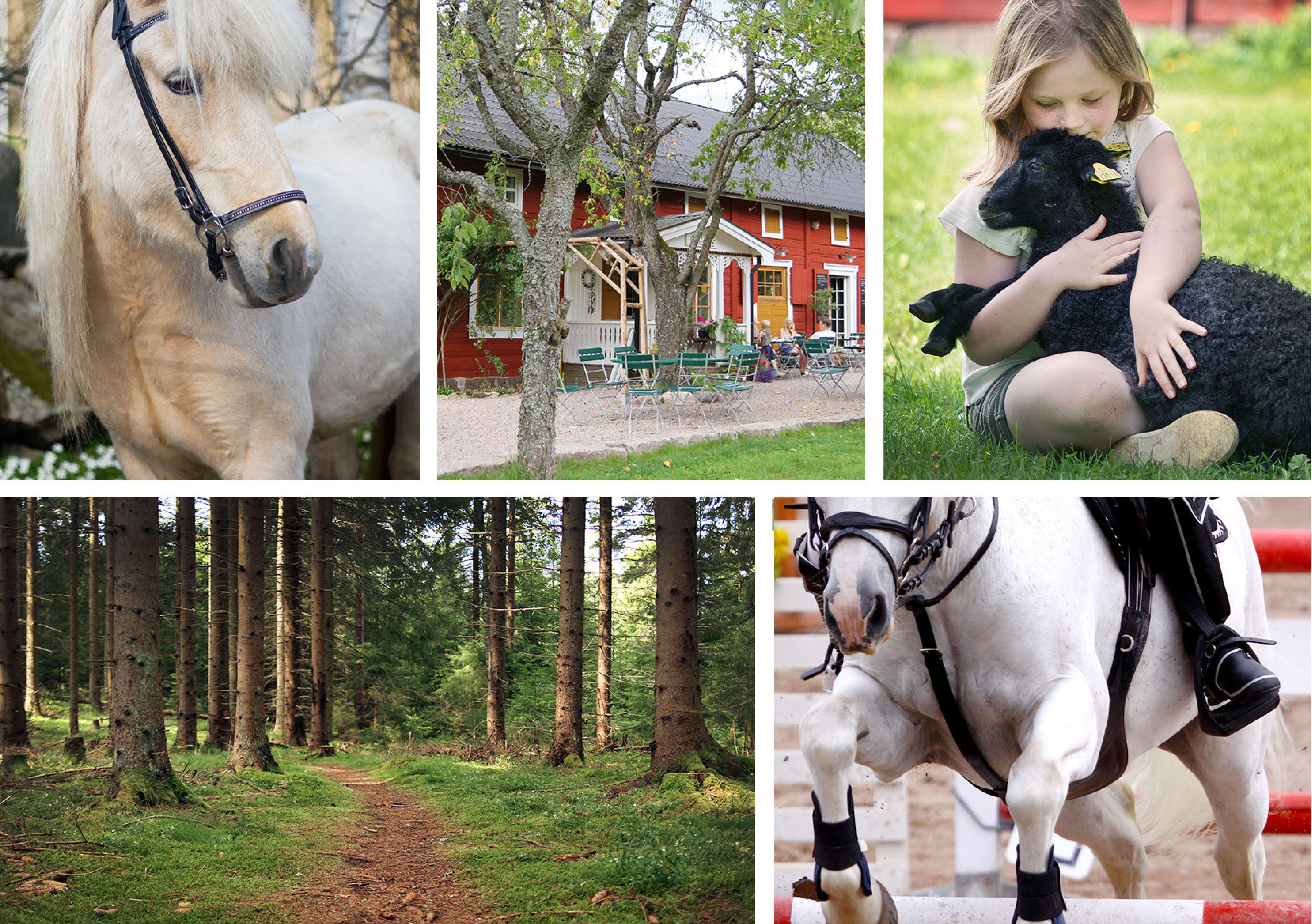 Horse experiences