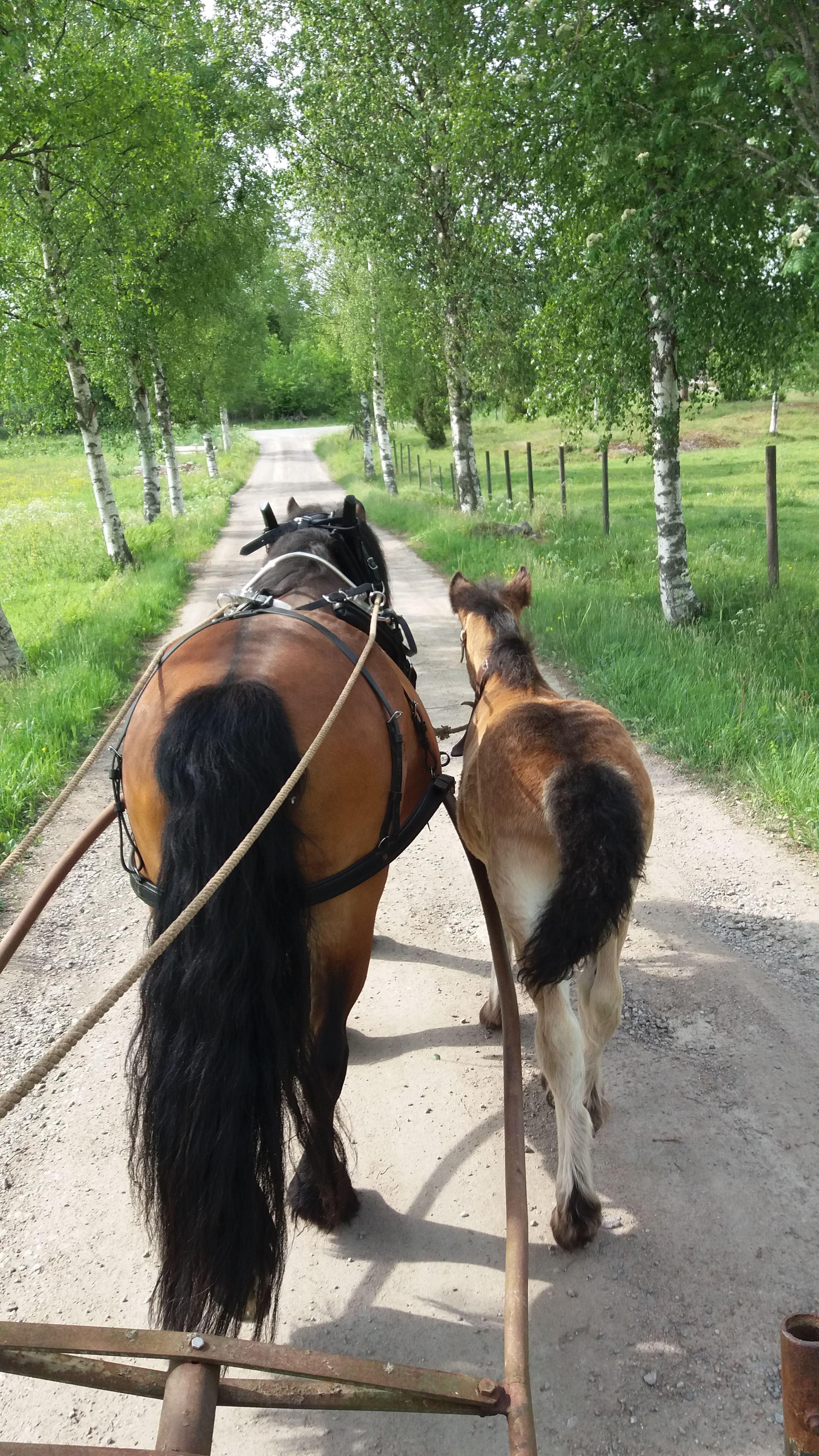 Stadstur med häst och vagn
