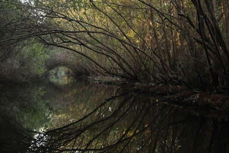 Estero El Chupadero (Sitio Ramsar)