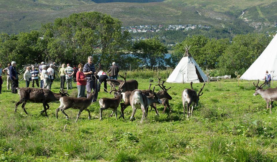 Visit Reindeer Camp– Tromsø Lapland