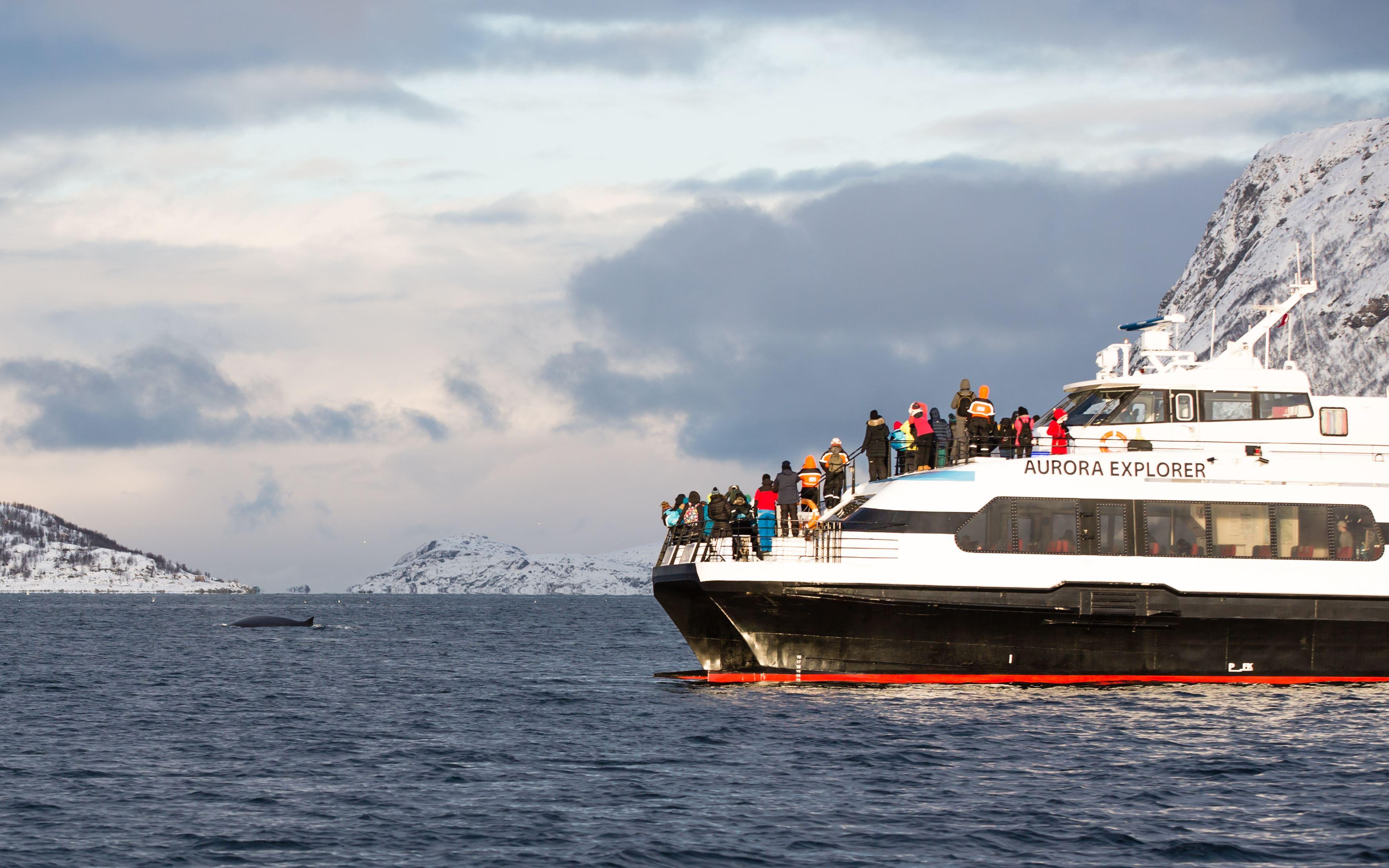 Whale Safari & Fjord Cruise - Arctic Expedition