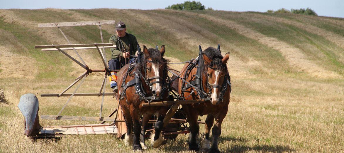 Slimminge harvest festival - celebrating its 20th anniversary in 2015