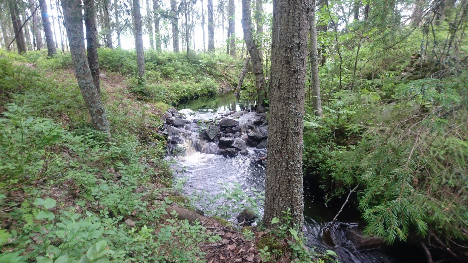 Grössjön Nature Reserve