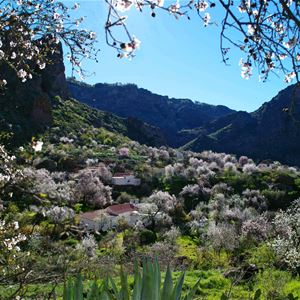 Blommande vyer, Parador Cruz de Tejeda, Gran Canaria, Signaturresor