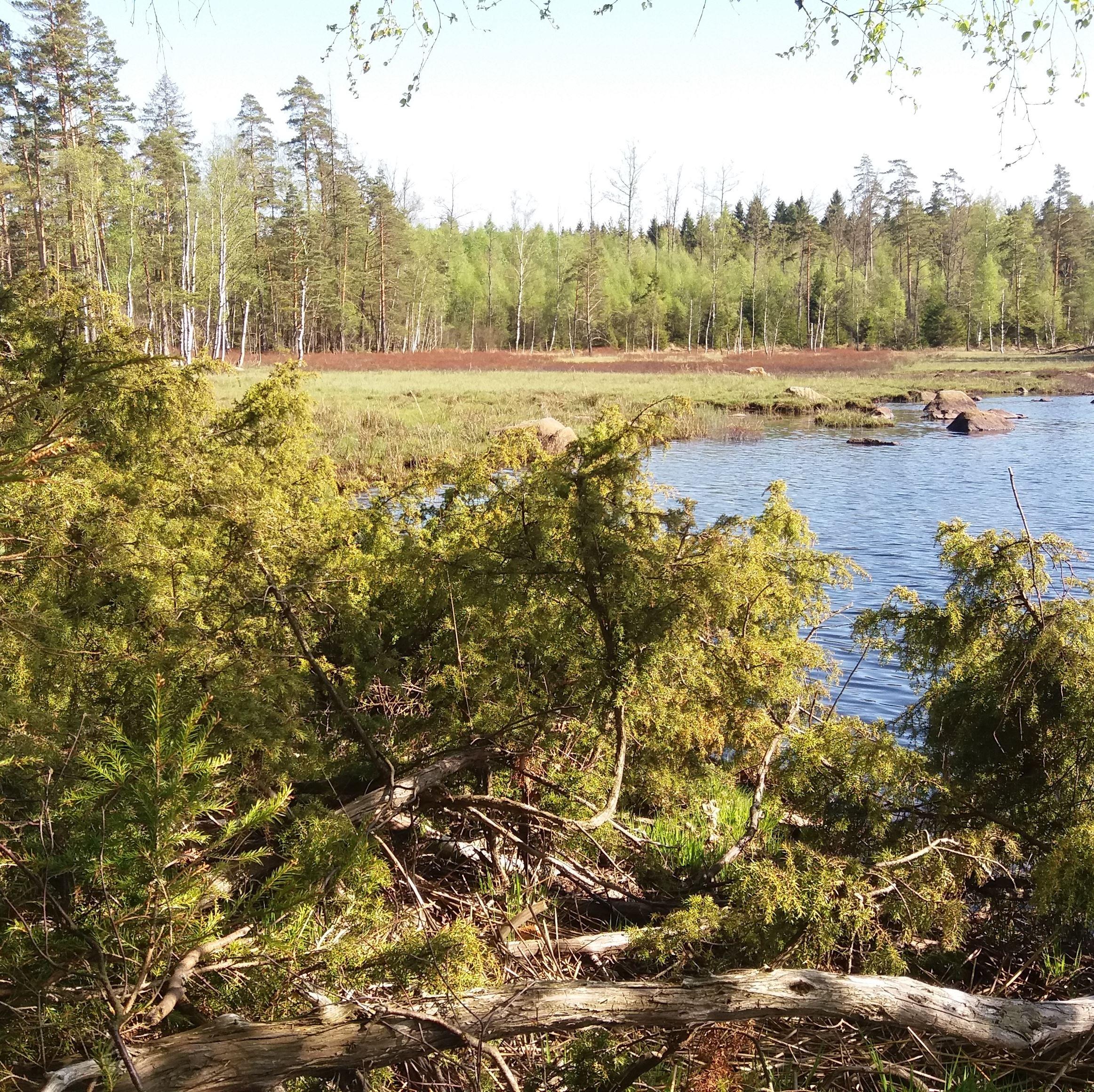 Malsjön med fuktängar