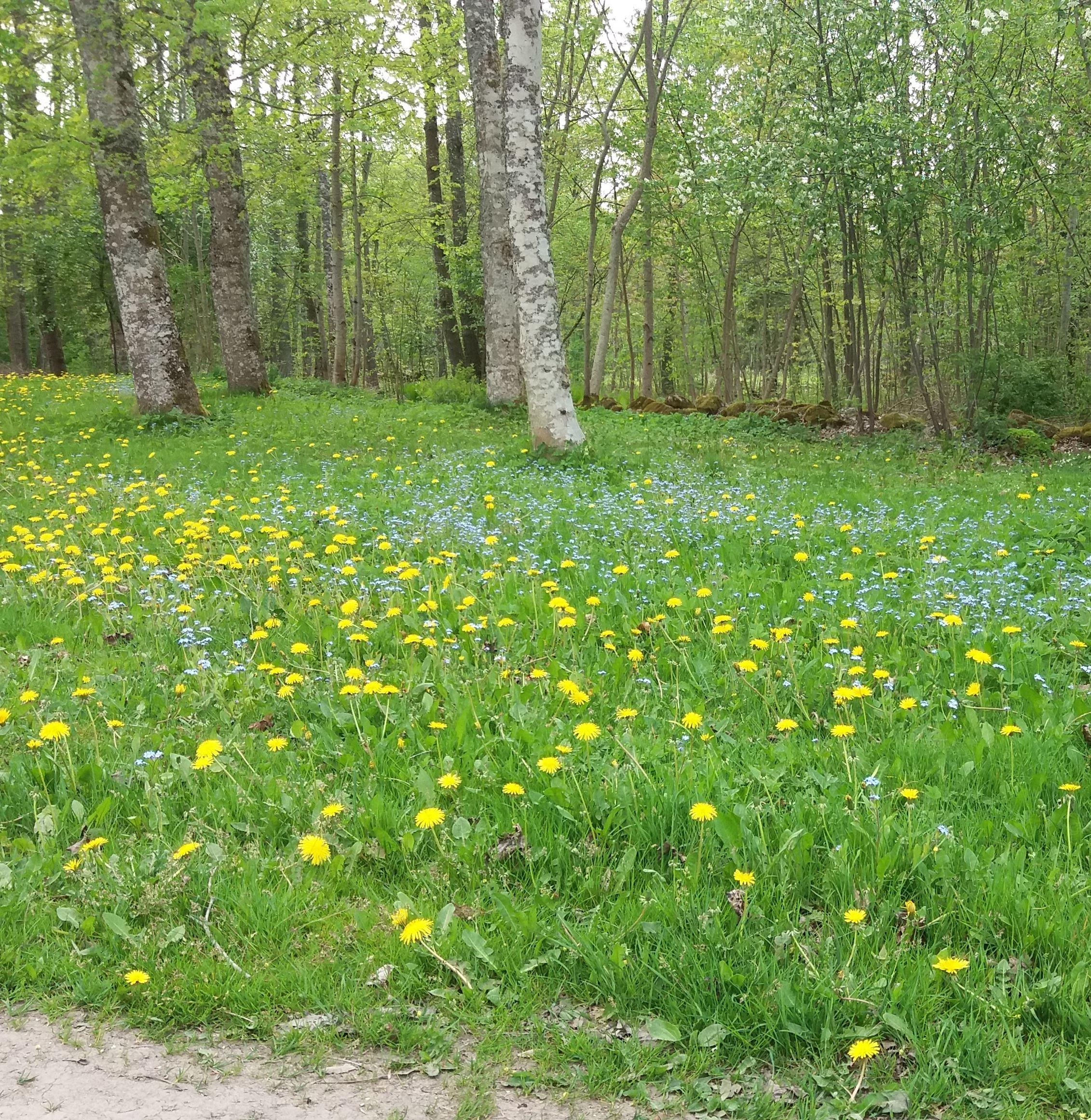 Sveriges nationalfärger