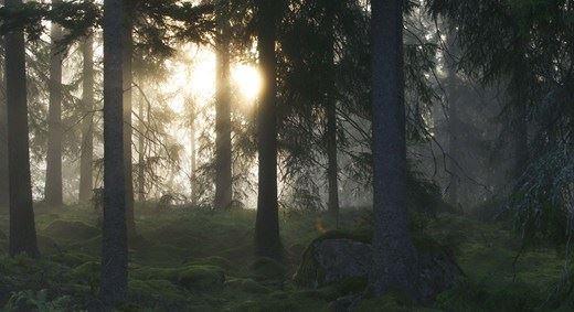 en bild på solen som skiner in i en skogsdunge