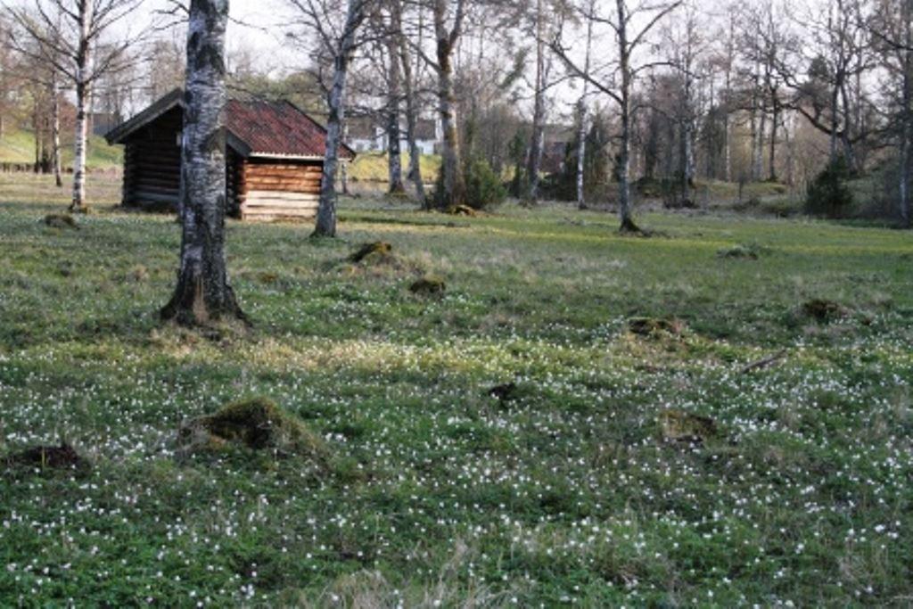 Slåtterfest i Komstad Ängar