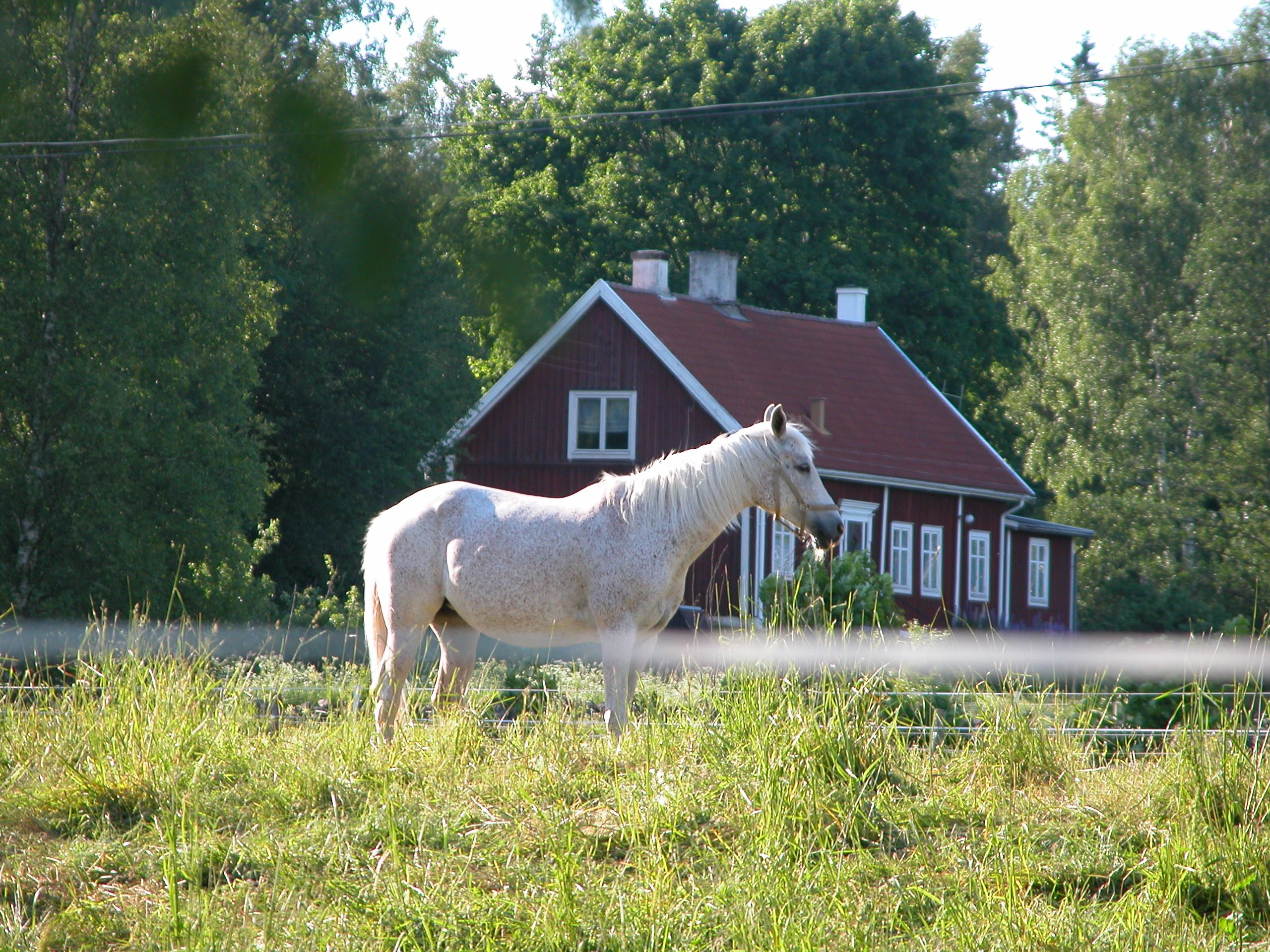 Horse ridning in Bockatorp