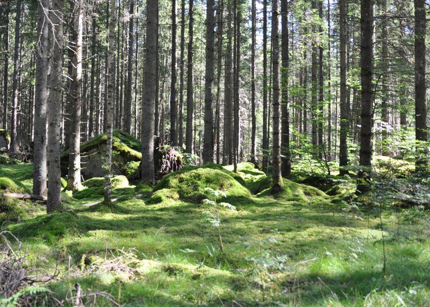 Siggaboda - Stensjönäs naturreservat och Snapphanestenen