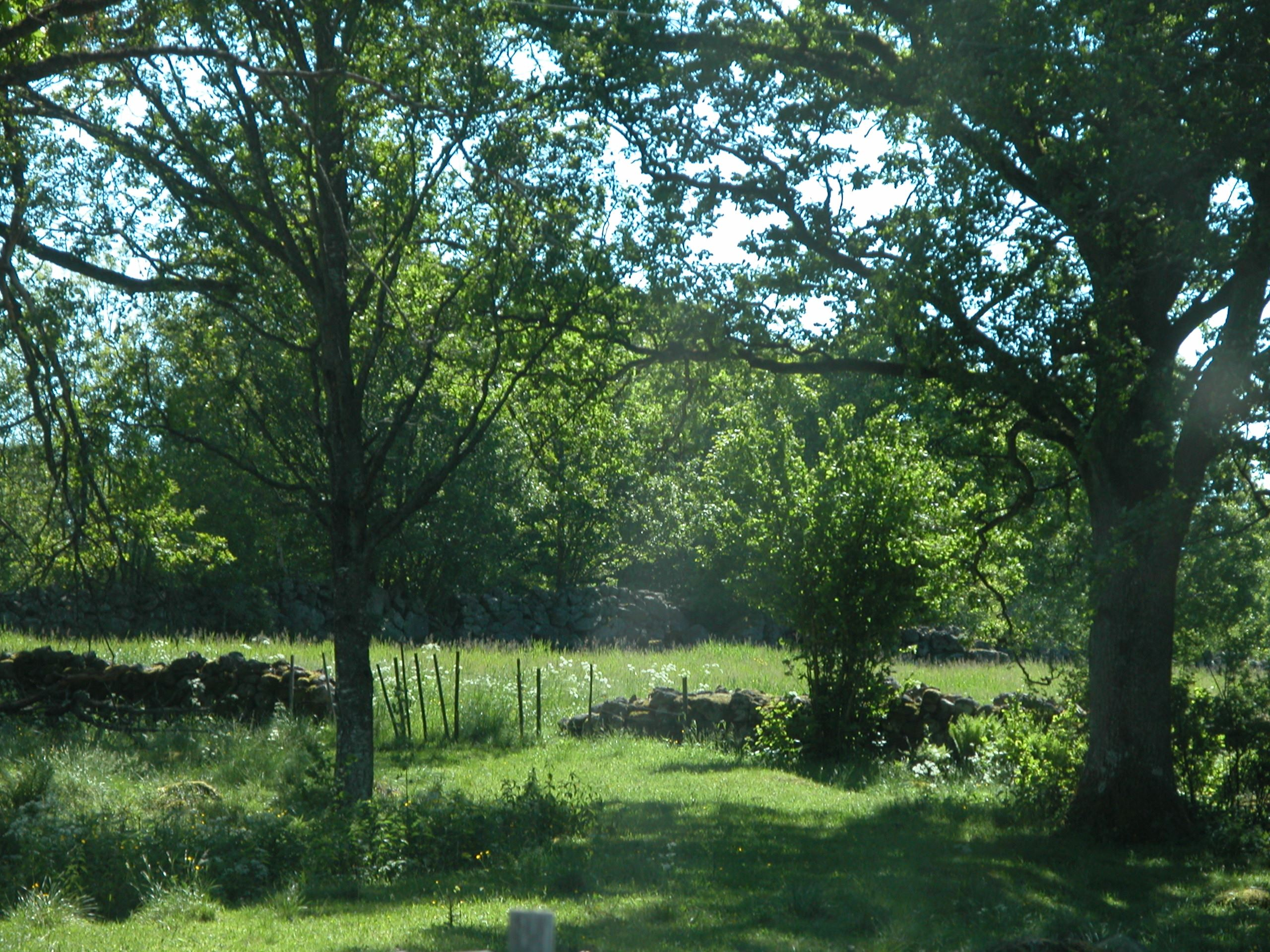 Walking-trail – On yesterday's paths