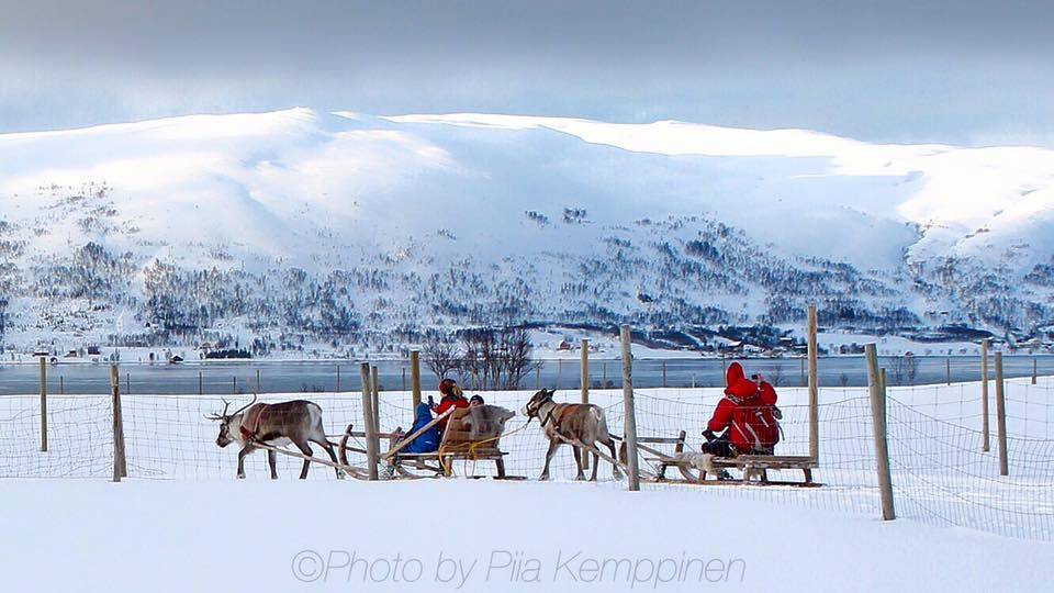 Reindeer Sledding, Reindeer Feeding and Sami Culture - Tromsø Arctic Reindeer