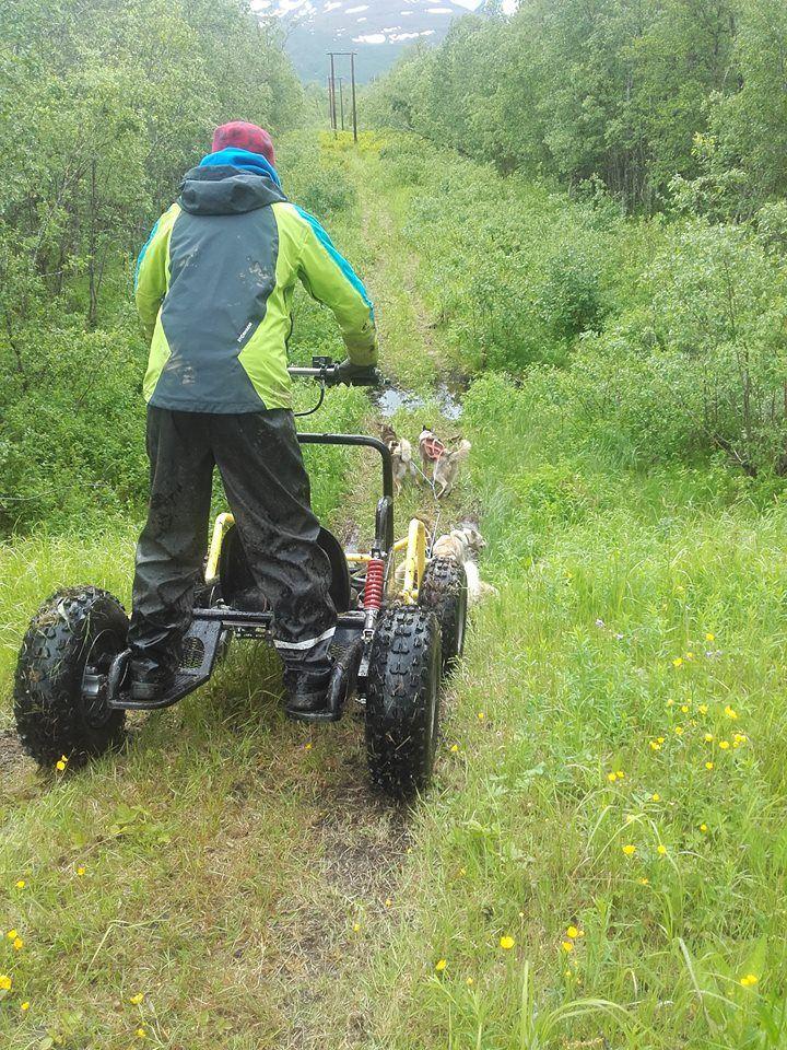 Hundekjøring på hjul – Northern Light Dog Adventure