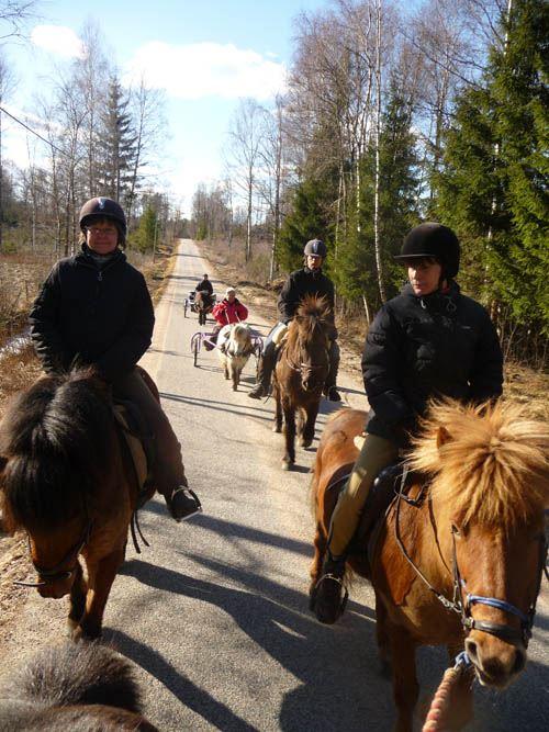 Krantz gård - Turridning på islandshästar