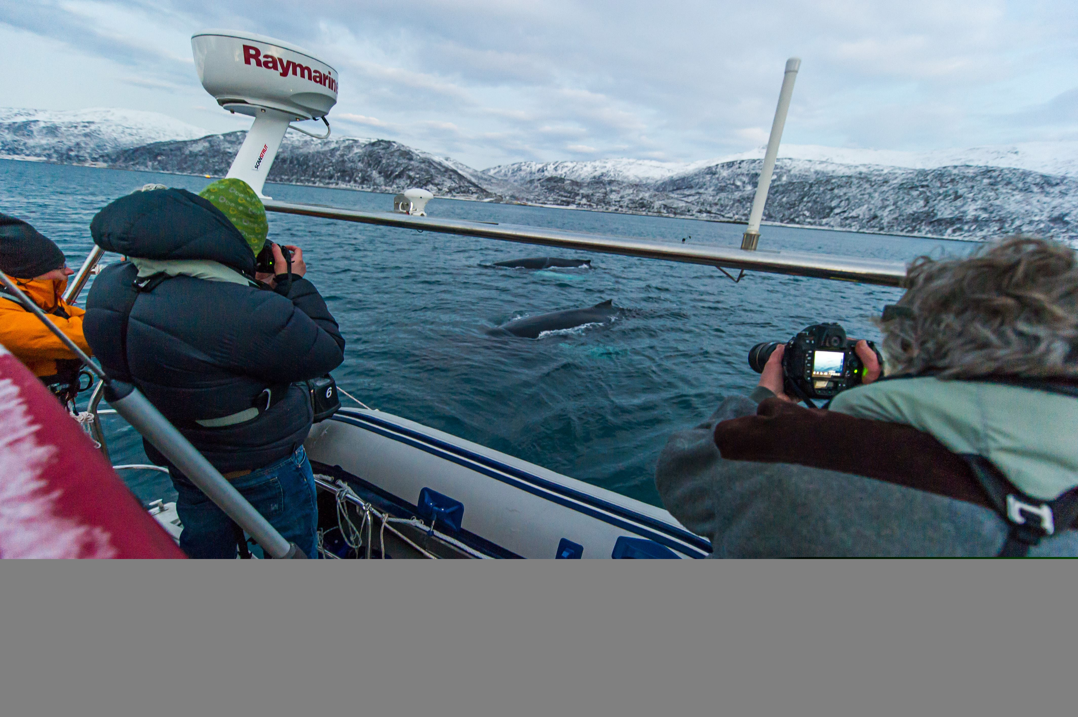Sailing with Whales – Boreal Yachting
