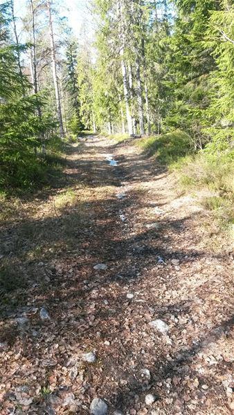 The Gusturleden Trail