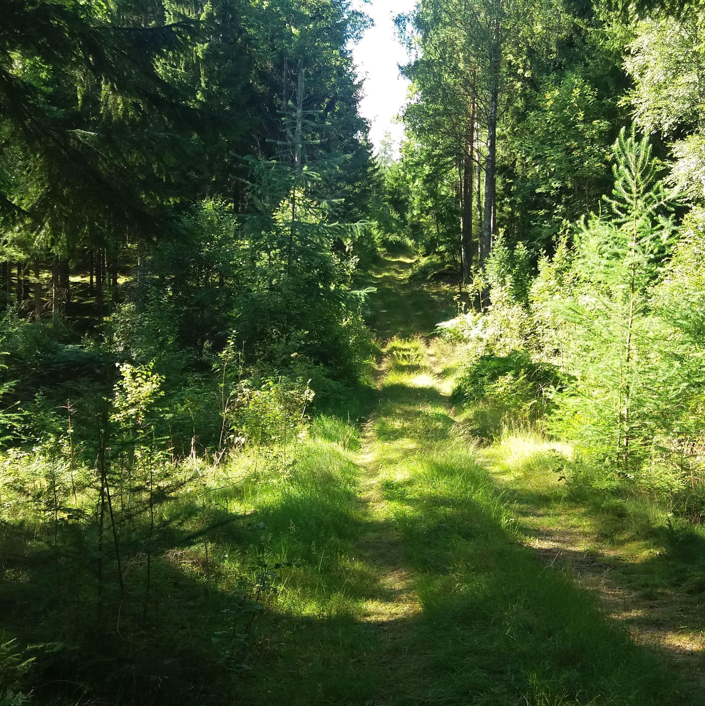 Cykelrundtur (MTB) Jonstorp-Kylen (34 km)