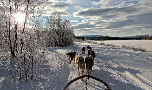 Holmen Husky Lodge 15 Km Dogsled Trip