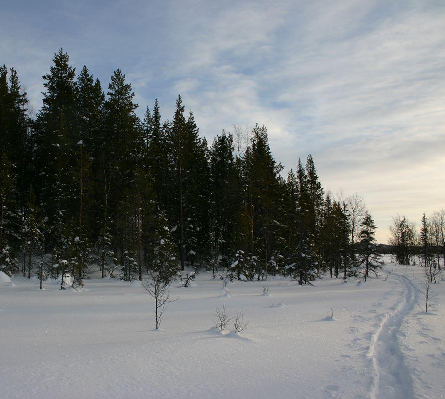 Jaktkort Gällivare Allmänningsskog